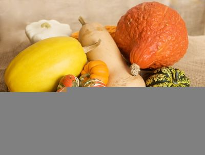 A variety of winter squash: Turban, Hubbard, Carnival (Acorn), Butternut, Spaghetti Squash, Kuri and mini-pumpkins