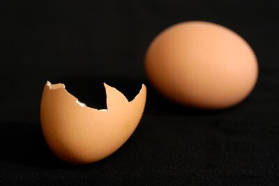 Brown Chicken Egg and Egg Shell