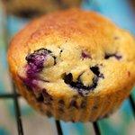 Moist Blueberry Coffee Cake Muffins