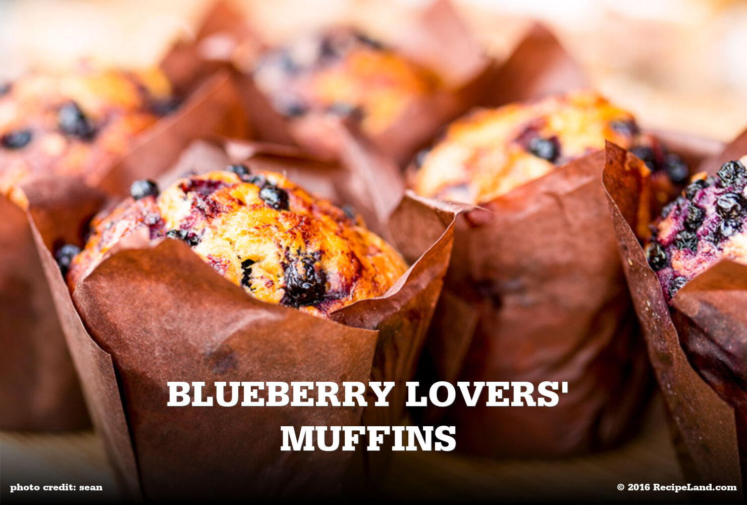 Blueberry Lovers' Muffins