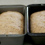 Place each cylinder of dough into one of the prepared loaf pans and press it gently so it touches all four sides of the pan.