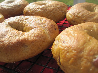 Bread Machine Pumpkin Spice Bagels