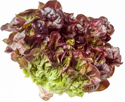 red oak lettuce head