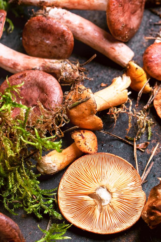 wild forest mushrooms