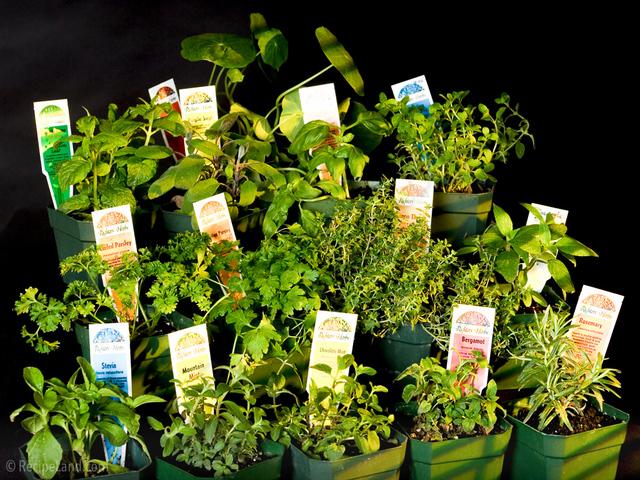 Herbs in the sun