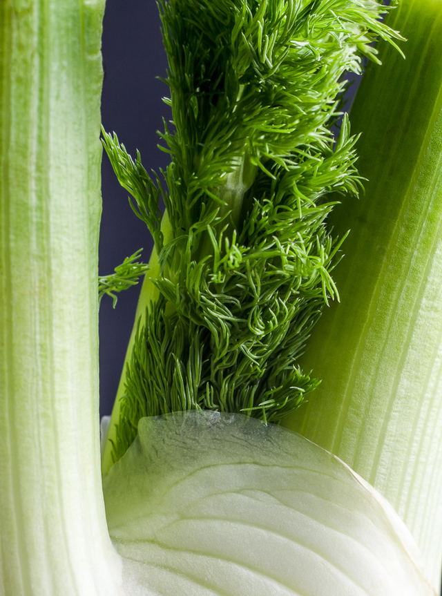 Fennel fronds, fennel leaves