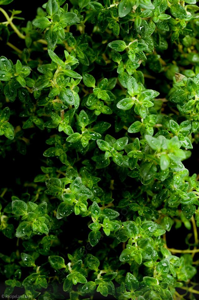 Fresh garden thyme