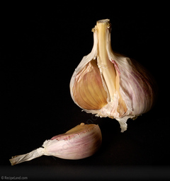Hardneck garlic