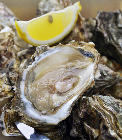 fresh oyster in their shell