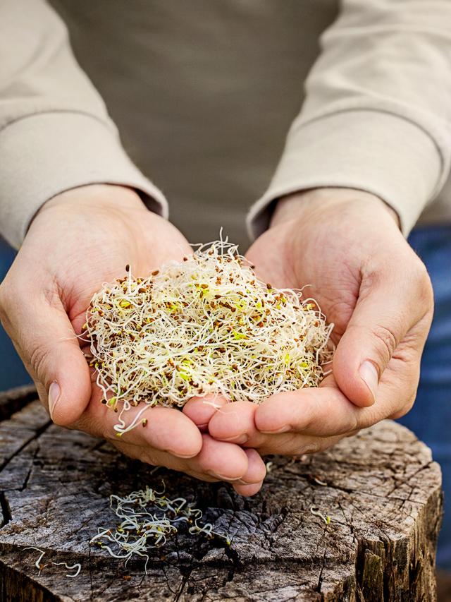 Alfalfa sprouts in hands