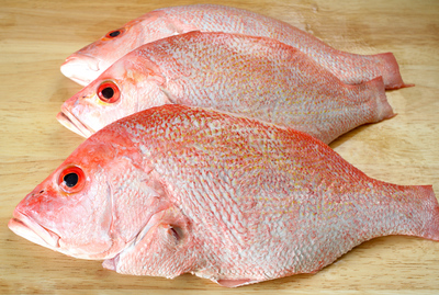 whole red snapper fish
